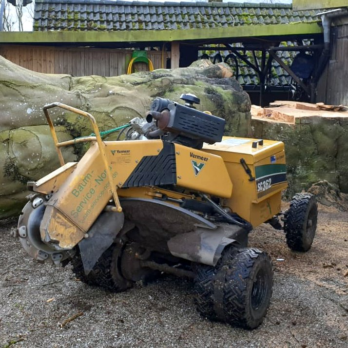 Baumpflege von Baum Service Nord